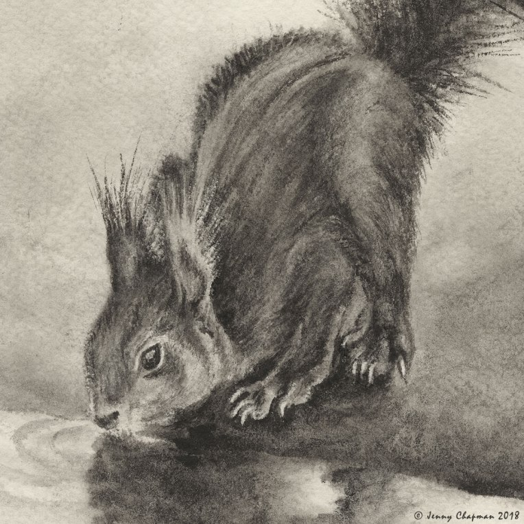 Red-squirrel-detail.jpg